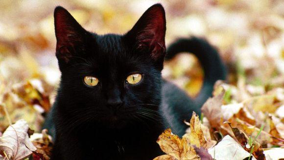 Pisici in vis: ce semnificatii bizare au pisicile aparute in vis!
