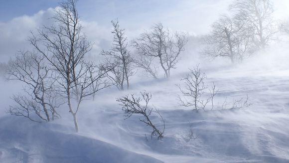 Meteorologii au facut anuntul! Ce se intampla cu vremea, codul portocaliu de viscol si ninsori a fost modificat
