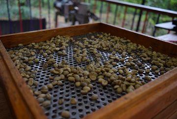 Cum este recomandat să consumi cafeaua verde