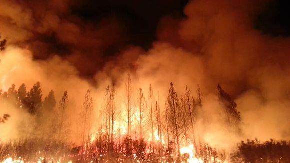 UPDATE: Incendii in Grecia - 60 de morti si sute de raniti! S-a declarat stare de urgenta