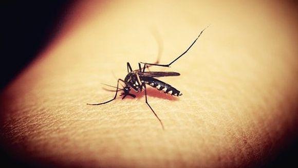 E ingrijorator! Numarul deceselor cauzate de virusul West Nile creste alarmant