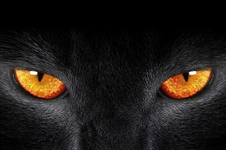 Latura intunecata a zodiilor: BALANTA spune multe si face putine