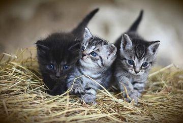 Decizie frapanta a autoritatilor: Au interzis pisicile ca animale de companie!