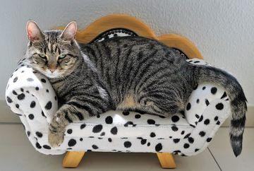 2 lucruri de care sa tii cont cand cumperi un pat pentru pisici dintr-un petshop online
