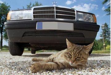 CE SE INTAMPLA cu pisicile si cainii omorati pe sosele din Anglia! FOTO