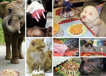 Torturi din carne, prajituri si coifuri! CUM isi SARBATORESC ziua de nastere cele mai rasfate ANIMALUTE FOTO