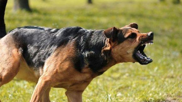 Ti-e TEAMA de cainii vagabonzi? Iata care sunt CELE MAI PERICULOASE ZONE din Bucuresti