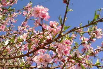 LA MULTI ANI tuturor romanilor! Cati sunt cei care isi serbeaza onomastica de Florii!