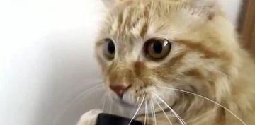 Pisicuta care face SENZATIE pe internet! NU O SA-TI VINA SA CREZI ce face cu furtunul unui aspirator VIDEO
