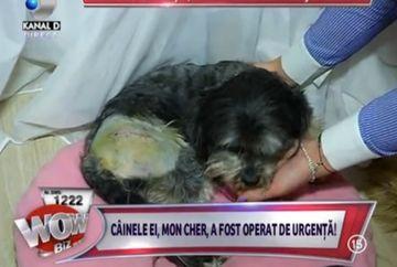 Adelina Pestritu a trecut prin clipe grele! Catelul ei, Mon Cher a suferit o operatie la oase FOTO