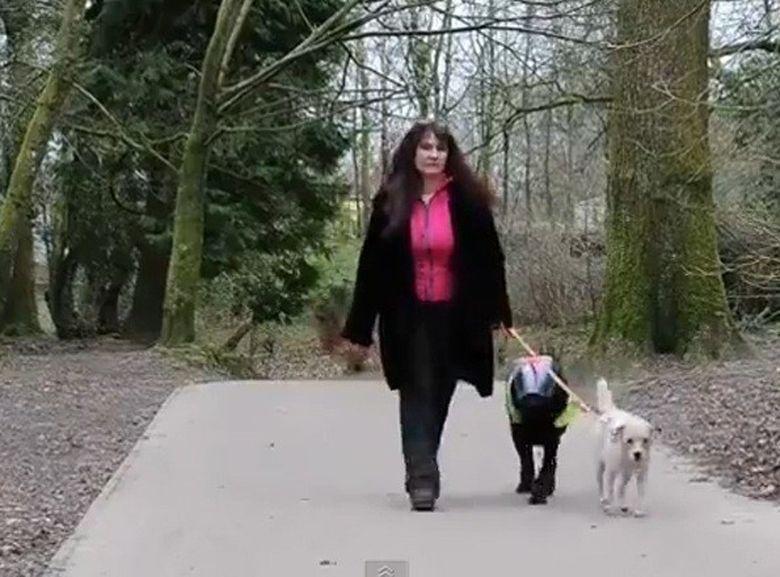IPOSTAZE INDUIOSATOARE: Un terrier, caine insotitor pentru amicul lui labrador ORB VIDEO