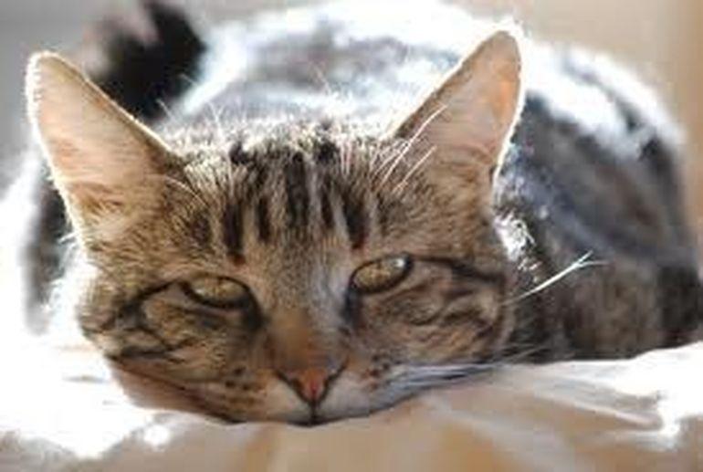 Toata lumea a ramas SOCATA cand MEDICII VETERINARI au DESCOPERIT ASTA in stomacul unei pisici