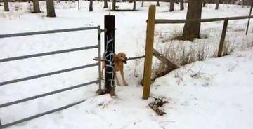 RAZI CU LACRIMI! Vezi cum se chinuie cainele in imagine sa iasa din spatiul lui de joaca VIDEO