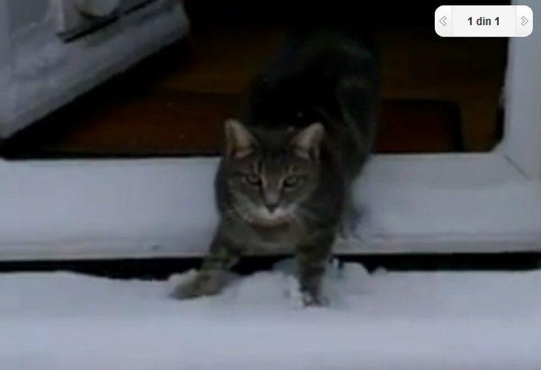 VIDEO SUPER AMUZANT: Cum reactioneaza o pisica prima data cand vede zapada