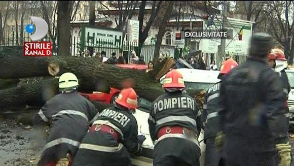 Un copac a cazut pe Soseaua Stefan cel Mare din Bucuresti. 8 masini au fost avariate IMAGINI IN EXCLUSIVITATE