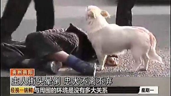 VIDEO EMOTIONANT: Vezi ce face un caine in momentul in care stapanul lui lesina in plina strada. Trecatorii au ramas ULUITI