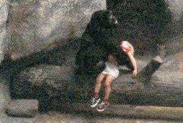 Lectie de viata pentru OAMENI! POVESTEA IMPRESIONANTA a gorilei care a salvat viata unui copil