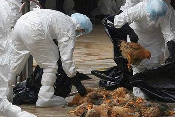 Veste INGRIJORATOARE: Un virus mult mai agresiv al gripei aviare a fost identificat in Indonezia. Organizatia Mondiala a Sanatatii este IN ALERTA