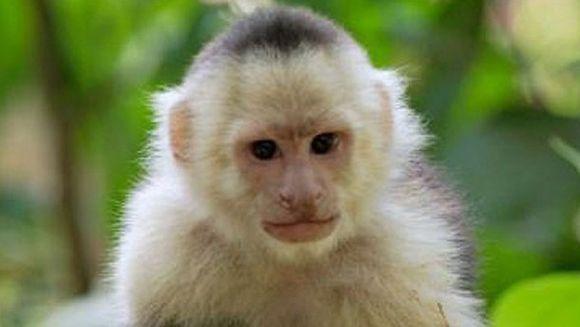 Poveste ULUITOARE! A fost crescuta de maimute timp de cinci ani dupa ce a fost rapita si abandonata intr-o jungla