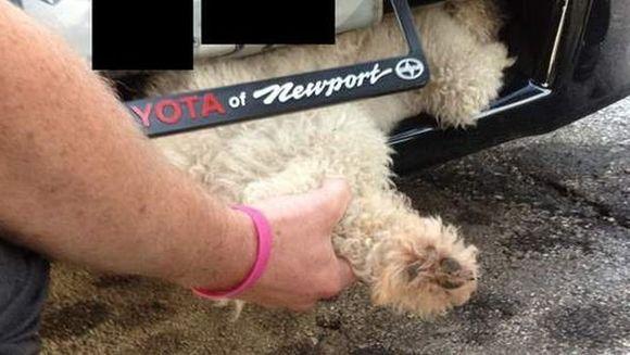 El este cel mai norocos caine din lume! A supravietuit dupa ce a fost lovit si a mers 17 kilometri in bara unei masini FOTO+VIDEO