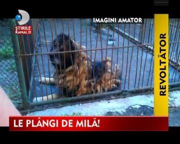 Animalele de la gradina zoologica din Baia Mare traiesc in CONDITII MIZERE VIDEO