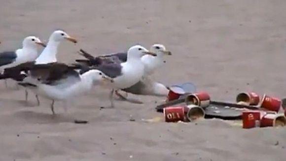 RAZI CU LACRIMI! Vezi aici ce au trebuit sa indure turistii unei plaje dupa ce un grup de tineri a hranit pescarusii cu LAXATIVE VIDEO