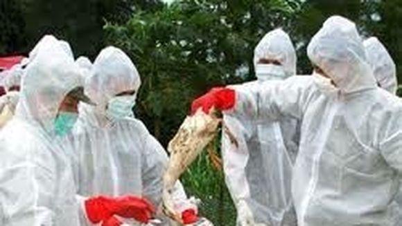 Gripa aviara face ravagii in China. Un barbat a murit dupa ce a fost spitalizat