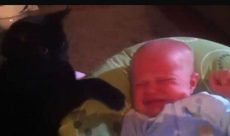 Ti se inmoaie inima! O pisica adoarme un bebelus :) VIDEO