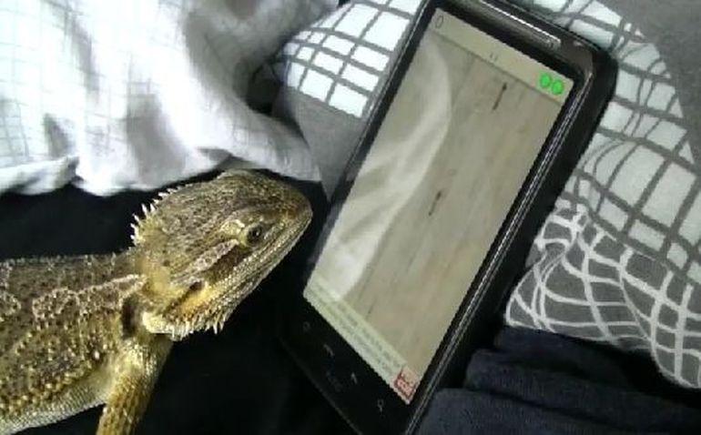Soparla care a cucerit internetul! Se joaca pe tableta mai bine decat un om. VIDEO