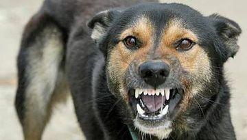 SOCANT: Un copil a fost omorat de cainii vagabonzi, in Parcul Tei din Capitala