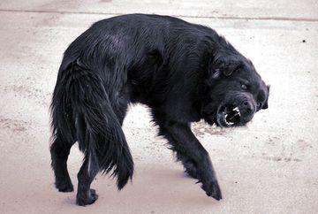 Referendumul pentru eutanasierea cainilor: Iata care este INTREBAREA la care vor raspunde bucurestenii