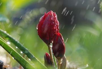 Avertizare meteo: COD PORTOCALIU si COD GALBEN de ploi si vijelii! Vezi zonele afectate