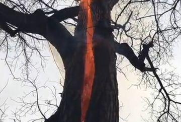 """Se plimbau printr-o padure, cand au descoperit """"copacul diavolului""""! Ardea singur, din interior, fara sa scoata fum! Imaginile acestea iti fac pielea de gaina"""