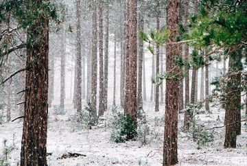Informare meteo: Precipitatii in toata tara, iar la munte vor predomina ninsorile
