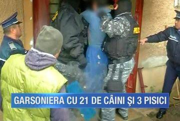 Peste 20 de animale erau tinute intr-un spatiu de doar cativa metri patrati intr-o garsoniera din Brasov