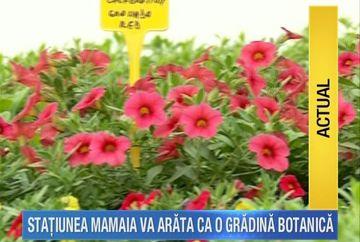 Flori din belsug si copaci de toate felurile in statiunea Mamaia! Le veti putea admira pe toate daca va petreceti mini-vacanta de Paste la mare