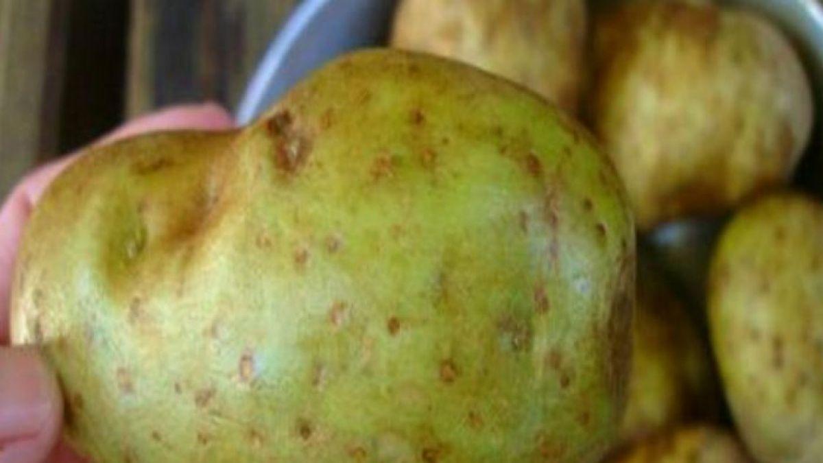 cartofi verzi din varicoză)