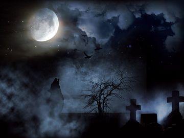 """Au mers noaptea in cimitir, sa caute fantome, cand au auzit zgomote in apropiere! Au fost ingroziti de ce au gasit! """"Bine ca n-am avut copii cu noi!"""""""