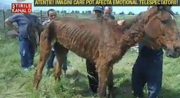 Iti vor da lacrimile de durere! Un cal lasat sa moara in chinuri pe un camp din Giurgiu! Animalul a fost dus acolo chiar de stapanul sau!