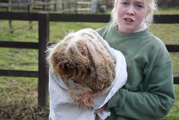 "Bietul caine avea blana atat de murdara si incalcita incat nu vedea pe unde merge si nu putea sa urineze normal! ""Nu-i gaseam coada cand l-am tuns!"" E incredibil cum arata acum, dupa cosmetizare"