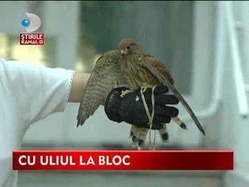Mai tare ca Iulia Albu! O femeie din Bucuresti se plimba pe strazi cu un uliu