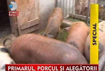 Porcul electoral! Cel mai longeviv primar spune cu mana pe inima ca animalele din ograda i-au ASIGURAT un vot din partea alegatorilor VIDEO