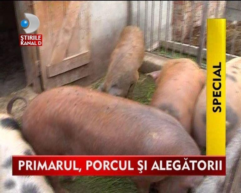 Porcul electoral! Cel mai longeviv primar spune cu mana pe inima ca animalele din ograda i-au ASIGURAT un vor din partea alegatorilor