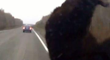 WOW! O coliziune care putea sa-l coste viata. Soferul chiar nu se astepta sa-i iasa asa ceva in cale VIDEO