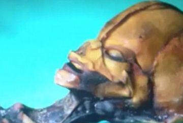 DESCOPERIRE SOCANTA! Cercetatorii au DEZLEGAT MISTERUL unui presupus schelet de extraterestru FOTO
