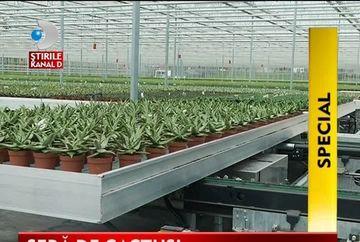 Sere ROBOTIZATE, viitorul unei agriculturi eficiente VIDEO