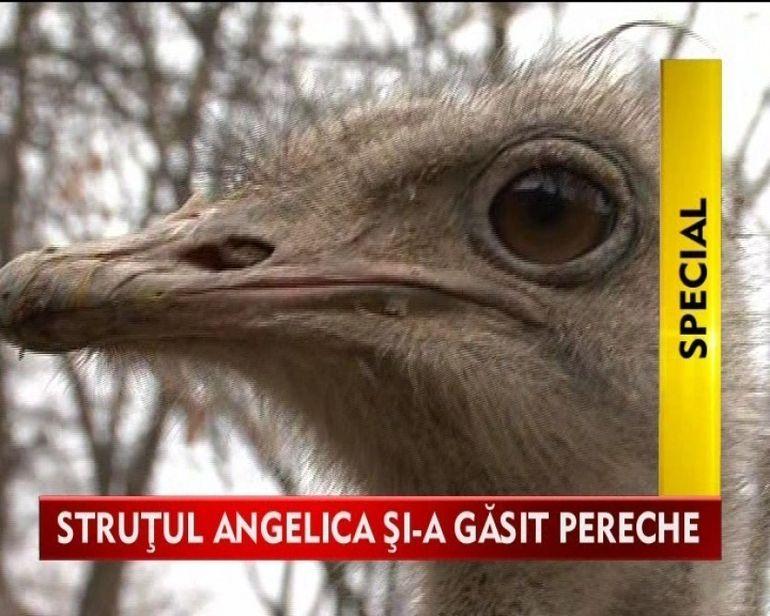 Strutul Angelica nu mai e singur! Si-a gasit marea iubire VIDEO