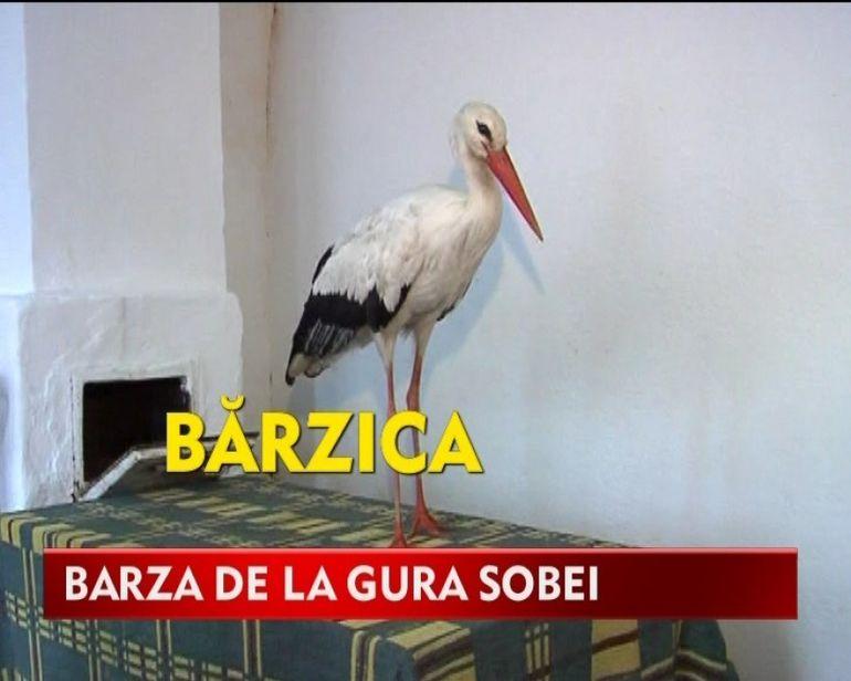 Dupa gaina, BARZA a devenit animal de companie, iar pisica MANANCA seminte! VIDEO DE SENZATIE