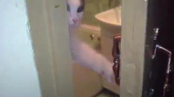 MORI DE RAS! O pisica vrea intimitate in baie VIDEO FUNNY