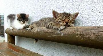 ADORABIL! Uite cum incearca un pui de pisica sa-si trezeasca partenerul de joaca VIDEO